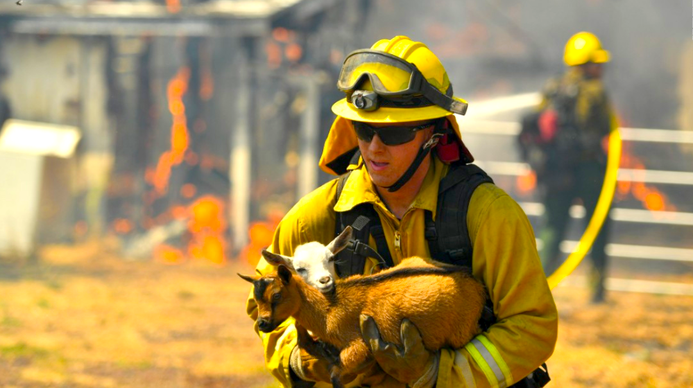 Animals in harms way Disaster Response