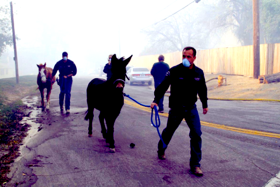 Saving horses from the flames