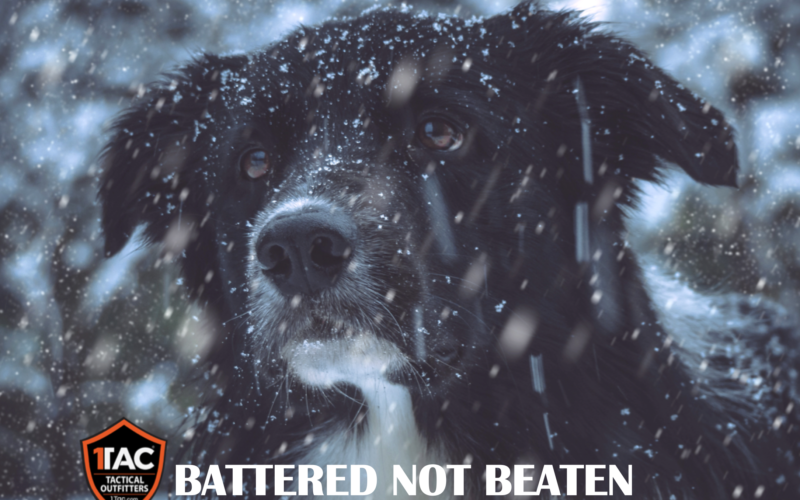 Surviving Winter Storms
