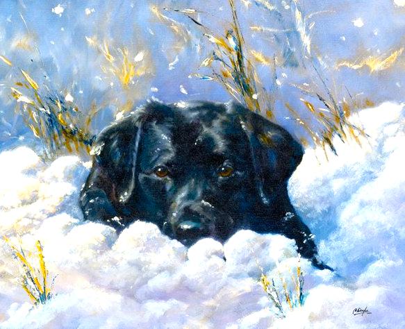 Dog Survives Winter